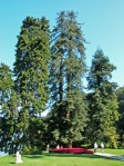 Villa-Melzi-dEril-alberi-storici