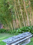 Villa-Melzi-dEril-bambu-Phyllostachys-mitis