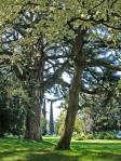 Villa-Melzi-dEril-scorcio-del-parco