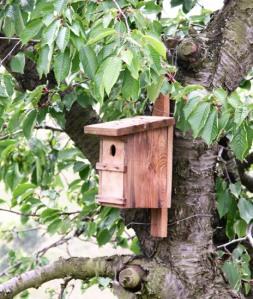 nido-artificiale-per-uccelli