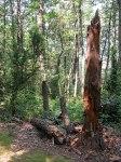 montemarcello-_parco_-legno-degradato