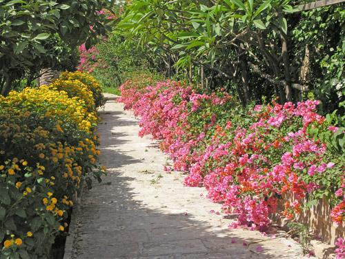 Lantana for Bordure giardino sempreverdi
