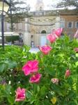 Palazzo-Parisio-un-ibisco-della-collezione-e-sullo-sfondo-il-palazzogd-all'italiana