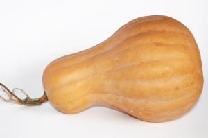 zucca-butternut-ponca