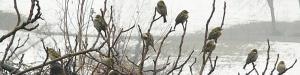 cropped-uccellini-su-ramo-in-inverno-per-testata.jpg
