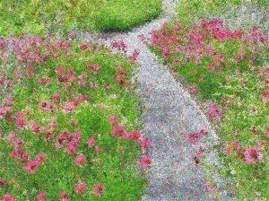 sentiero-fiorito-per-de-andre
