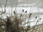 uccellini-su-ramo-inverno