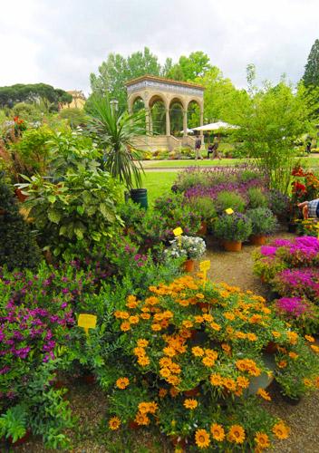Mostra mercato autunnale di piante e fiori di firenze for Piante e fiori