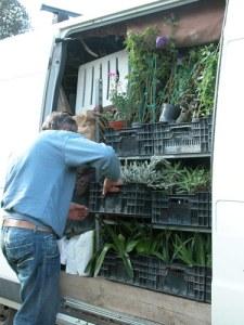 dino-pellizzaro-scarica-le-sue-piante