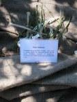 feletig-piante-a-radice-nuda-2