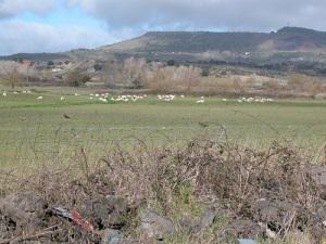 paesaggio-con-pecore