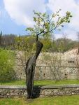 villa-della-porta-bozzolo-vecchio-albicocco-curato