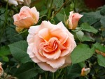 Rosa-Silvina-Donvito-Barni