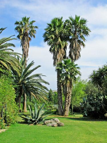 Biviere palme monumentali mimma pallavicini s weblog - Palme nane da giardino ...