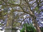 Gamberaia-sotto-il-grande-pino laricio presso il belvedere di cipressi