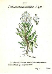 illustrazione-dal-libro-Hortus-medicus-et-philosophicus-di-Camerarius