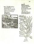 una-tavola-di-Plantarum arborum fruticum...stampato a Francoforte nel 1562