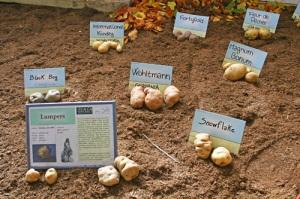 mostra-internazionale-della-patata-Torriglia-2008