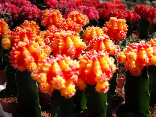 301 moved permanently - Le piante grasse si possono tenere in casa ...