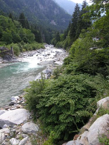 Reynoutria-japonica-(in primo piano) lungo-il-fiume-Sesia-presso-Alagna