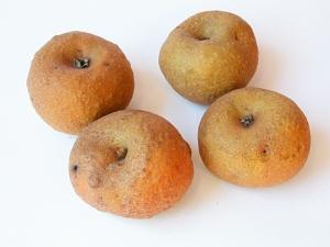 Si chiama 'Piatlin' ed è considerata la mela da mensa più buona d'Italia da esperti che l'hanno valutata secondo parametri di aroma, consistenza, qualità organolettiche, conservabilità ecc. E' una mela invernale tipica della Valle dell'Elvo, la più occidentale del  Biellese, in Piemonte. Di pezzatura ridotta, con la buccia rugginosa, ruvida e un po' bitorzoluta, promette davvero poco. Ma sotto la pelle ha una polpa croccante e serbevole sino al periodo di Pasqua, meravigliosamente dolce, con un aroma delicato di mandorla. Considerata ormai un ricordo da chi l'aveva assaggiata da bambino perché gli alberi innestati dai contadini del passato sembravano tutti morti, è stata invece recuperata circa 15 anni fa e oggi è fuori pericolo di estinzione e promette con la sua bontà di farsi conoscere in tutta Italia. La prova è che diversi espositori di frutta, anche non piemontesi, la propongono a Flor09.