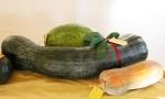zucca-lunga-di-Napoli-coltivata-a-Pray-(22-chili)
