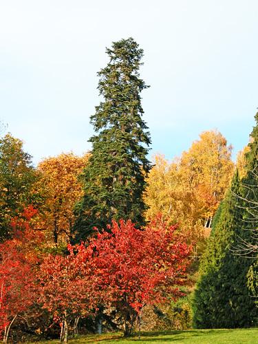 Alberi caducifoglie e sempreverdi in autunno al parco for Alberi da giardino sempreverdi