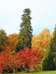 alberi-caucifoglie-e-sempreverdi-in-autunno-al-Parco-della-Burcina