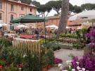 scorcio-di-Floracult-2013