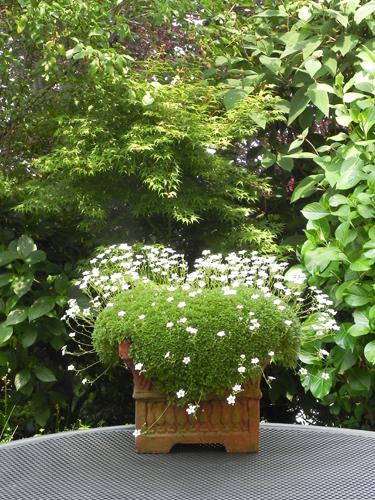 Una foto una storia dal 14 giugno 2013 mimma for Una storia a pianta aperta