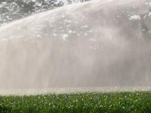 acqua-nebulizzata-su-campi-di-mais