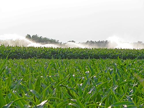 irrigazione dei campi mimma pallavicini 39 s weblog
