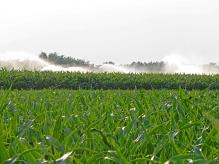 campi-di-mais-con-irrigazione