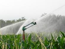 impianto-di-irrigazione-in-campo-di-mais