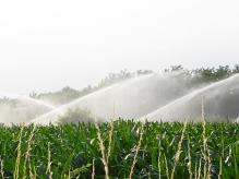 mais-con-irrigazione