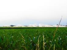 paesaggio-agrario-con-irrigazione