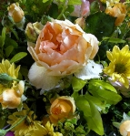 fiori-per-cannoni