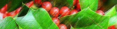 cropped-ilex-aquifolium-per-testata.jpg