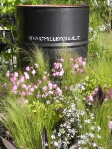 esposizione-piante-vivaio-Millefoglie