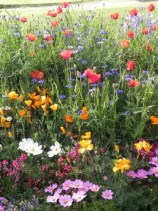 fiori-di-campo