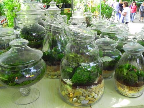 Cronache dalle mostre di maggio mimma pallavicini s weblog - Giardino in miniatura ...