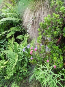 giardino-naturale-a-bordo-strada