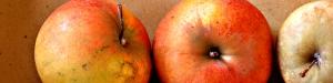 mela-Pearmain-Dore-per-testata