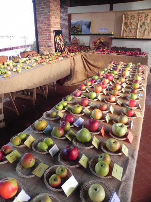 mostra-pomologica-amici-del-frutto-antico-di-Caluso