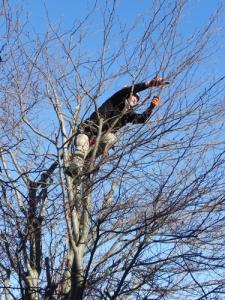 potatura-mio-faggio-tree-climbing