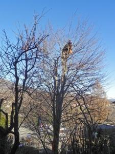 potatura-mio-faggio-tree-clinmbing