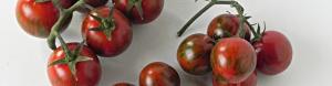 pomodori-Tigro-F1-per-testata
