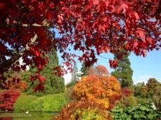 Acer-Quercus-Sheffield-Park