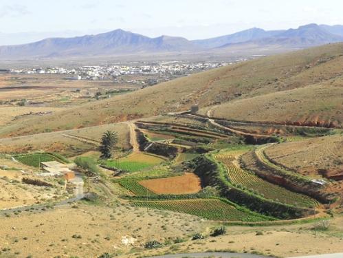 campi-a-gradinate-presso-Tindaya