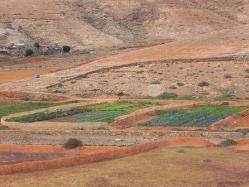campi-di-cavoli-e-lattughe-vverso-Ajuy